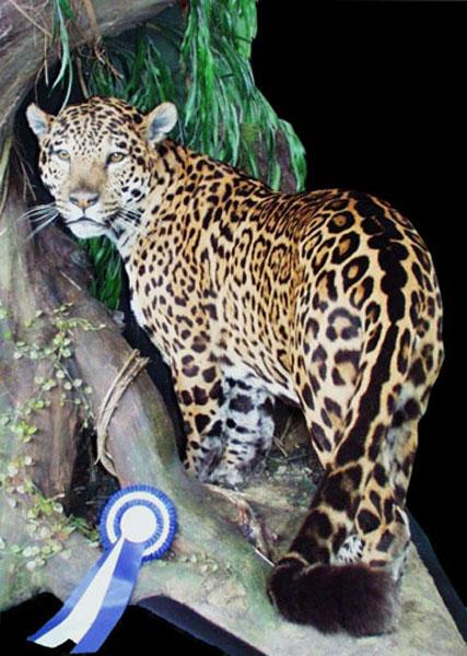 2002_jaguar_1_kl