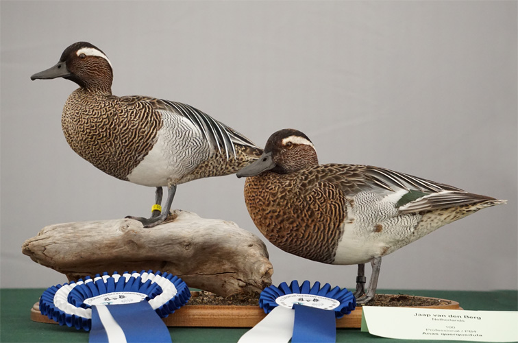 Garganey-Group-by-Jaap-van-den-Berg