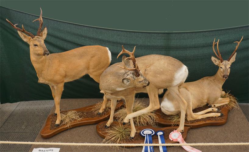 Roe-Deers-by-Kestutis-Bybartas