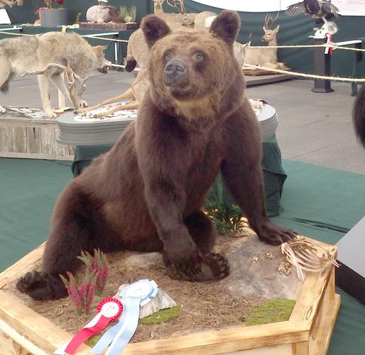 Sitting-Eurasian-Brown-Bear-by-Jouni-Pihkakoski
